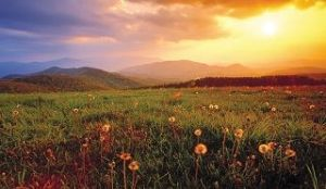 My daughter took this picture in Max Patch, Tennessee.