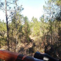 Tim's wooded view from his stand 12-27-2012