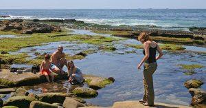 new life in a tide pool ocean
