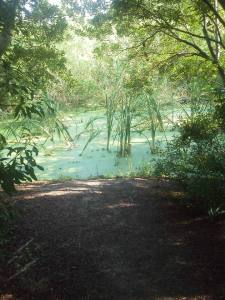 tideland swamp pool